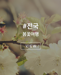 전국 봄꽃여행